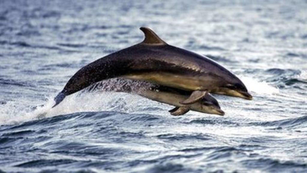_67346084_dolphinschrisgomersall
